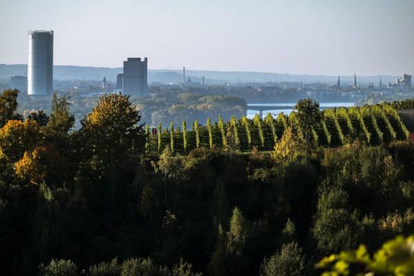 Skyline der Stadt Bonn bei Sonnenschein